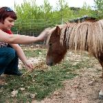 Pony for children
