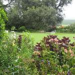 A view to the garden .. flowers and antiques