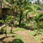 Ijen resto and guest house garden