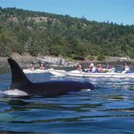 Sea Quest Expeditions Kayak Tours