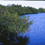 Great Calusa Blueway near the Inn