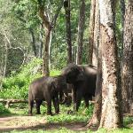  Elephant Camp