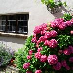 Photo de Appletree Cottage Bed and Breakfast