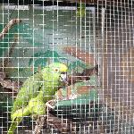 Parrots at the resort