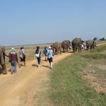 Elephant Nature Foundation - Surin Project