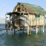 Foto de Turtleman's House