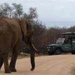 Kruger Park Safari