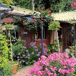 Beautiful garden-like entrance to Il Gabbiano