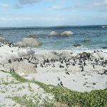  Boulders Beach