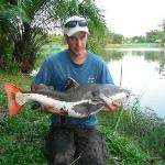  my nieghbours 17kg Amazonian Redtail Catfish