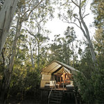 Paperbark Camp