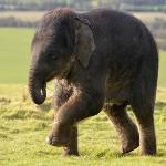 Provided by: ZSL Whipsnade Zoo