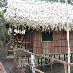 Tariri Amazon Lodgeの写真