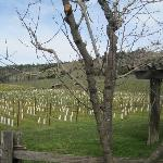  Grapevines--Navarro winery
