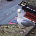  A friendly seagull