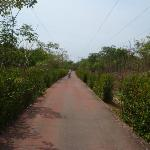  Bike Path, a must do (ixtapa)