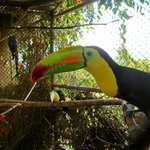 Toucan Rescue Ranch