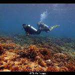 Scuba Froggy Senggigi
