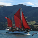 Fox II Sailing and Wildlife Cruise