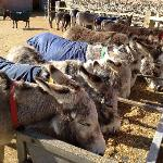 Donkey Sanctuary