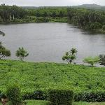 Tea fields with factory lake