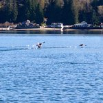 Hood Canal Adventures - Private Tours
