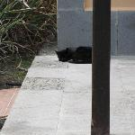 Villa guard cat!