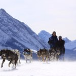 Howling Dog Tours