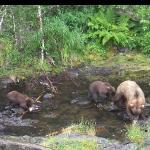  Mama griz and cubs