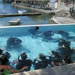 Emerald Green Diving Center - Day Tours