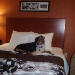 Foto Sleep Inn & Suites Scranton Dunmore