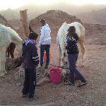  looking after the horses in the Wadi