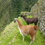 Along the Inca Trail Trek