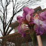Flower out in front of the Pecan House