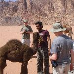  camels in the desert - with Audeh&#39;s brother