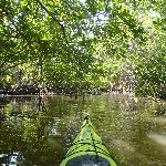 paddling the mangrove tunnel