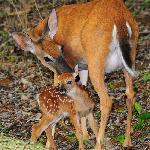 Mother and newborn