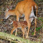 Mother and newborn1