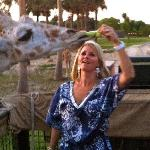  Feeding a giraffe