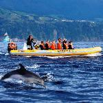 Terra Azul Azores Whale Watching