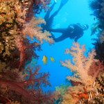 SPAD: South Pacific Adventure Divers