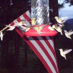 4th of July Hummers