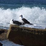 Gulls by the surf