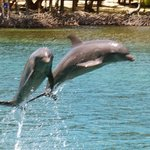 Dolphins at AKR