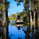 Airboat tour under the Cypress Hammock