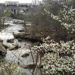 The Berea Falls with blossoming flowers viewed from the deck.