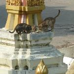 Happy cats getting fed, the Wat across from Queen's Garden.