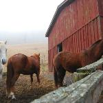 lovely horses and barn