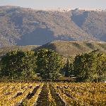 Visit Local Vineyards and sample Award Winning Pinot Noir.