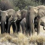 African Game Trek Safaris Day Tours